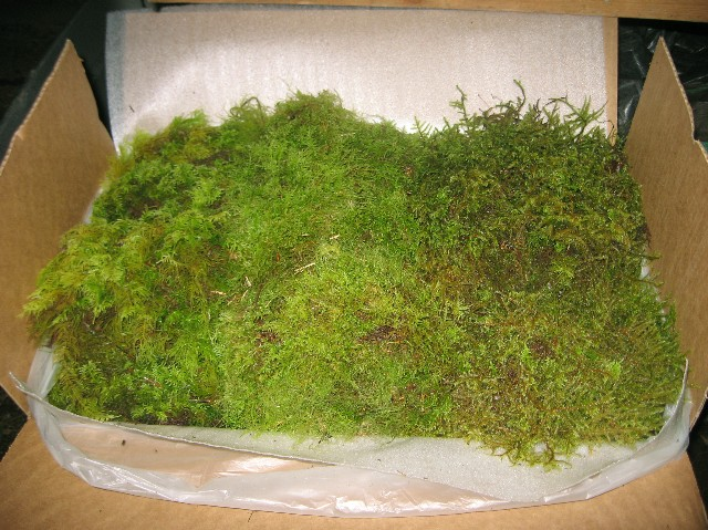A) Fresh Moss Sample Case